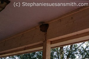 barn swallow nest under an eave