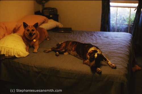 Sandy and Star in bedroom at Smithhaven