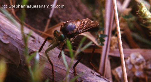 robber fly top