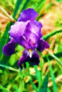 Iris Modern