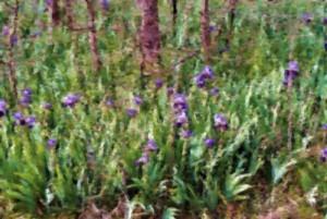 field of iris pastel