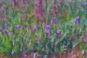 field of iris impressionist